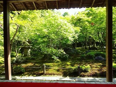 アオモミジの庭