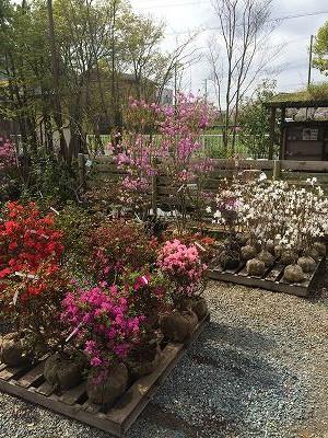 2016春立花ガーデン展示場1