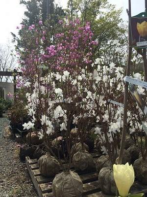 2016春立花ガーデン展示場6