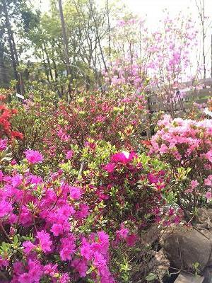 2016春立花ガーデン展示場4