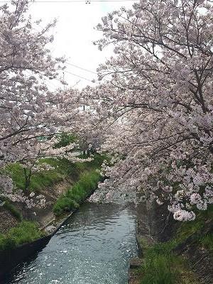 2016春立花ガーデン展示場2